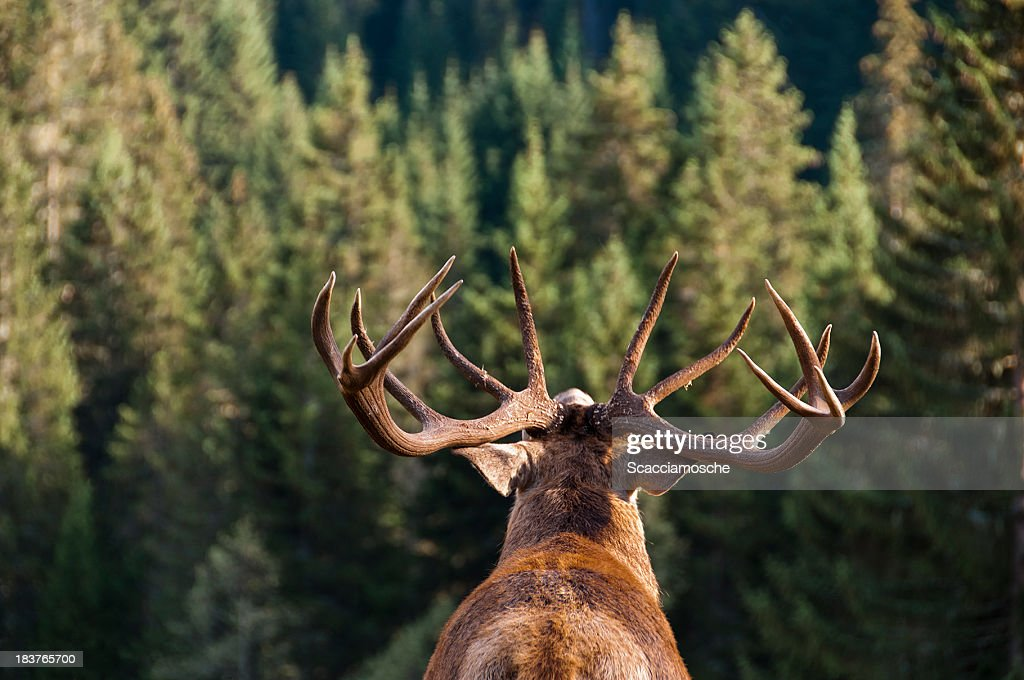 Call of the Wild : Stock Photo