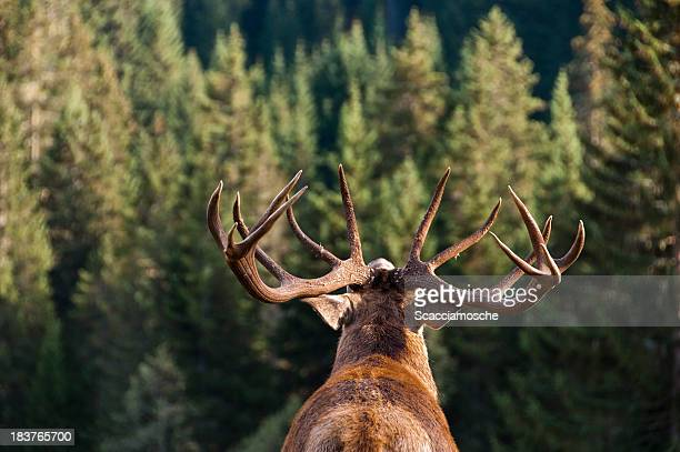 call of the wild - bucks stock pictures, royalty-free photos & images