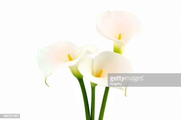 calla lilies flower - calla lily stock pictures, royalty-free photos & images