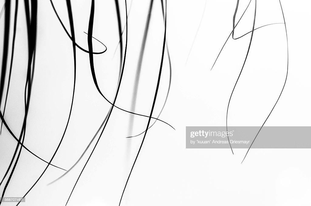Calligraphy grass : Stock Photo