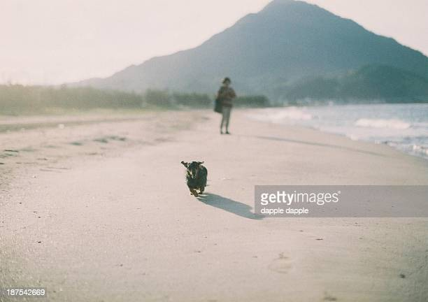 calling my dog - fukui prefecture stock pictures, royalty-free photos & images