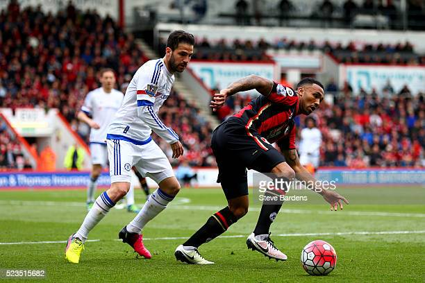 Callum Wilson of Bournemouth is closed down by Cesc Fabregas of Chelsea during the Barclays Premier League match between AFC Bournemouth and Chelsea...