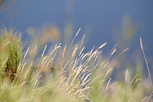 Calm and Peaceful Scene -Dry Grass and Water in the Distance 1139827192