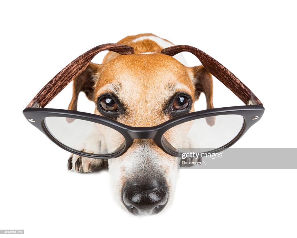 Calm concentrated dog is lying : Stock Photo