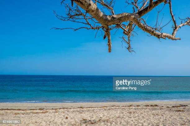 calm day at a beach facing the indian ocean. - caroline pang stock pictures, royalty-free photos & images