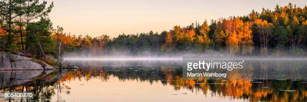 calm lake in the forest - panoramic stock pictures, royalty-free photos & images