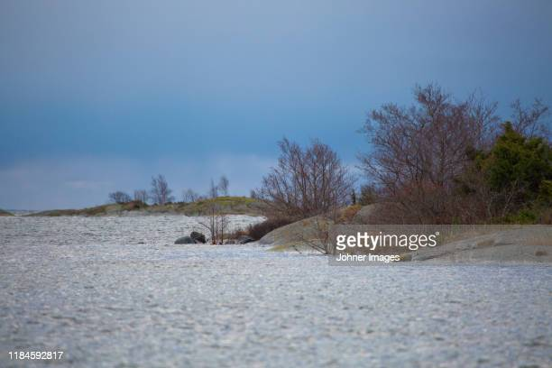 calm landscape - juniper tree stock pictures, royalty-free photos & images