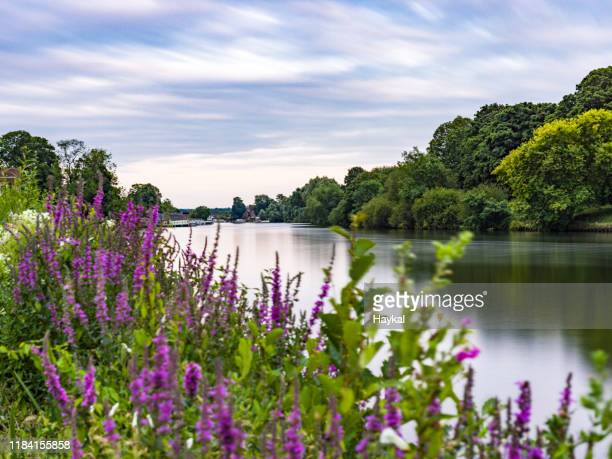 calm - surrey england stock pictures, royalty-free photos & images