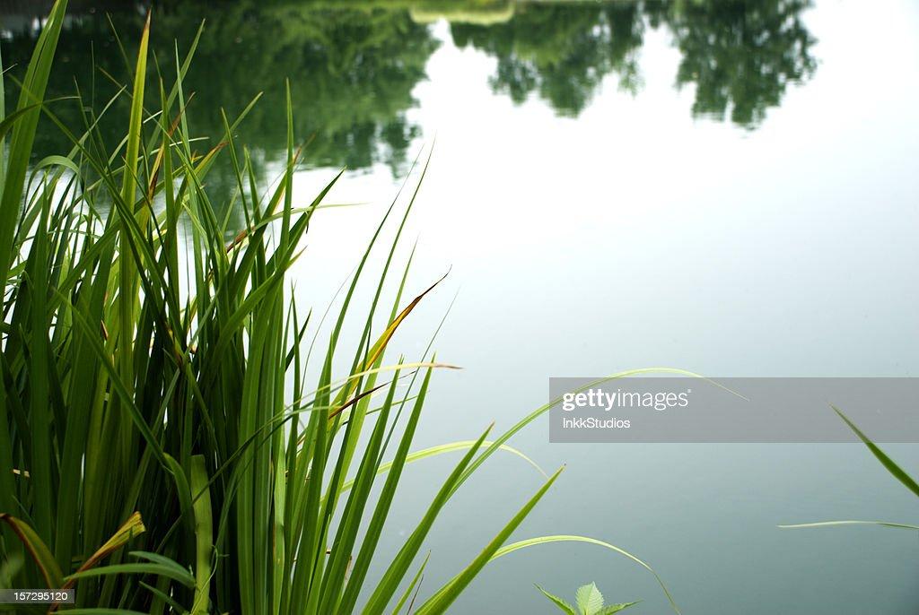 Ruhige Pond : Stock-Foto