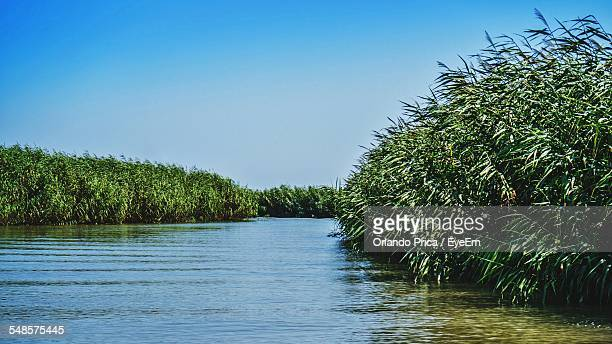 calm river amidst tree against clear blue sky - file:the_wyoming,_orlando,_fl.jpg stock pictures, royalty-free photos & images