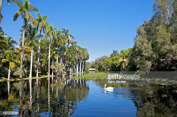 Calm waters with white swan near palms.