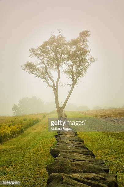 calming morning: scenic view of a tree and stone wall standing in a foggy meadow - melissa fague stock pictures, royalty-free photos & images