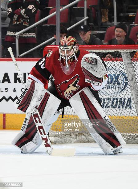 Calvin Pickard of the Arizona Coyotes warms up prior to a game against the Pittsburgh Penguins at Gila River Arena on January 18 2019 in Glendale...