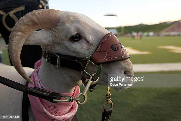 Cam the Ram patrols the sidelines as he supports the Colorado State Rams against the Boise State Broncos at Sonny Lubick Field at Hughes Stadium on...