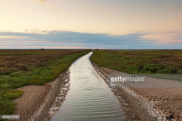 camargue landscape (france, bouches-du-rhône) - サントマリードラメール ストックフォトと画像