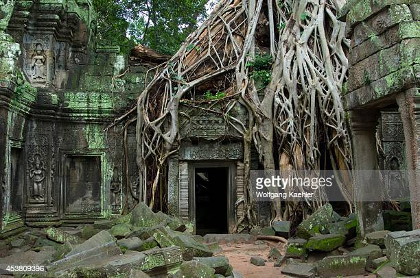 Cambodia, Angkor, Ta Prohm Temple, Fig Tree Growing On Temple Wall.