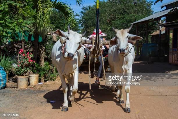 kambodscha: kampong tralach - ox cart stock-fotos und bilder