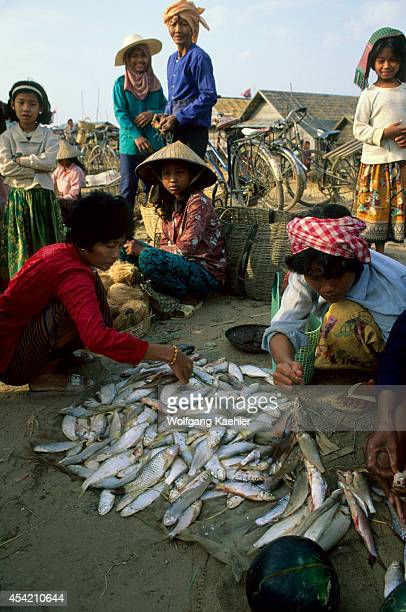 Cambodia Near Siem Reap Tonle Sap Lake Market Fresh Fish For Sale