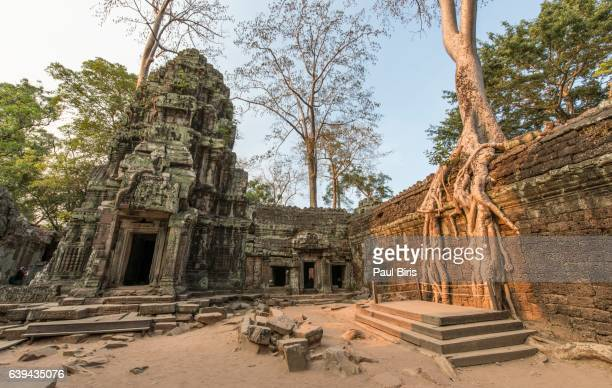 Wat Is Kapok.World S Best Kapok Tree Stock Pictures Photos And Images