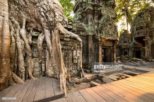 cambodia, siem reap province, angkor, tree roots growing on ta prohm temple ruins - angkor stock photos and pictures
