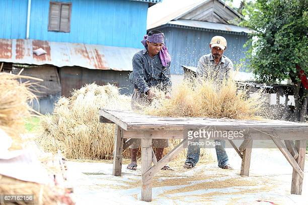 Cambodian farmers working in a rice field after threshing amber rice during a harvest at a field in a village South Phnom Penh on December 2 2016 in...