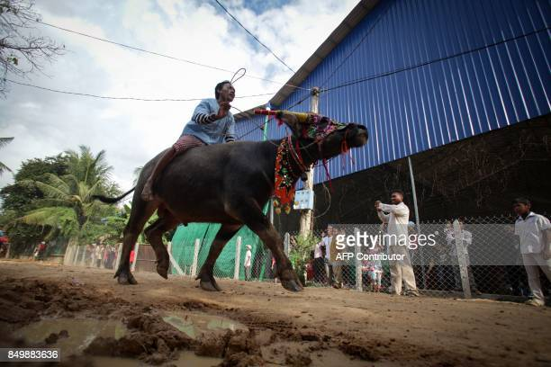 A Cambodian man rides a buffalo through the street during the Pchum Ben festival the festival of death at Vihear Suor village in Kandal province on...