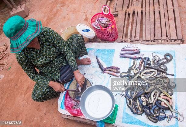 Cambodian woman selling snakes in a market in Siem Reap Cambodia