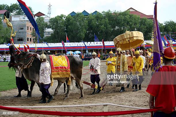 Cambodias King officials and foreign diplomats take part in a traditional royal ploughing ceremony just outside of the capital Phnom Penh where two...