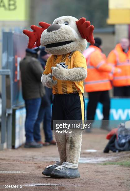 Cambridge United mascot Marvin the Moose prior to the Sky Bet League Two match between Cambridge United and Northampton Town at Abbey Stadium on...