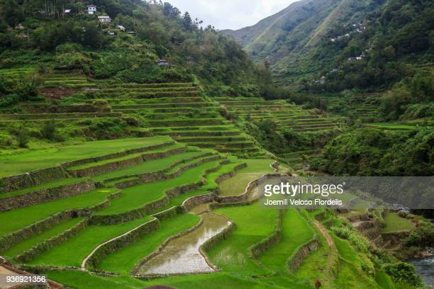 cambulo rice terraces (banaue, ifugao, philippines) - philippines stock pictures, royalty-free photos & images