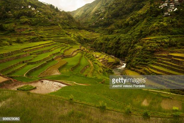 cambulo rice terraces (banaue, ifugao, philippines) - joemill flordelis stock pictures, royalty-free photos & images