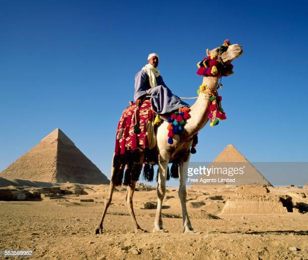Camel and Driver in Egypt