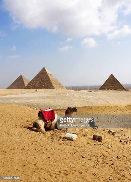 Camel And Man Against Pyramids Of Giza