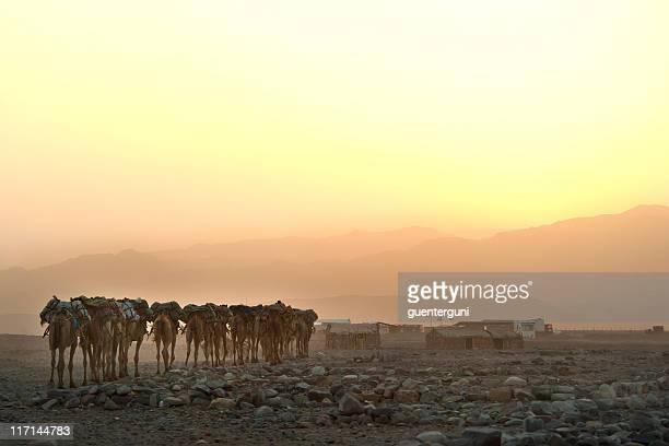 caravana de camelos ao pôr-do-sol, deserto danakil, etiópia - mula imagens e fotografias de stock