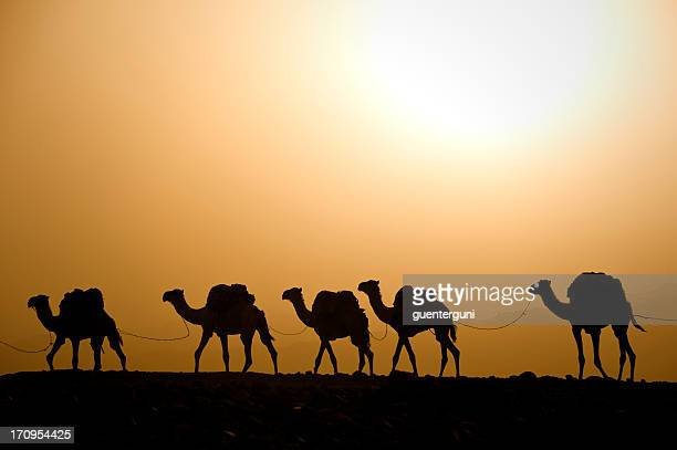 camel caravan against the sunset, danakil desert, ethiopia - camel train stock pictures, royalty-free photos & images