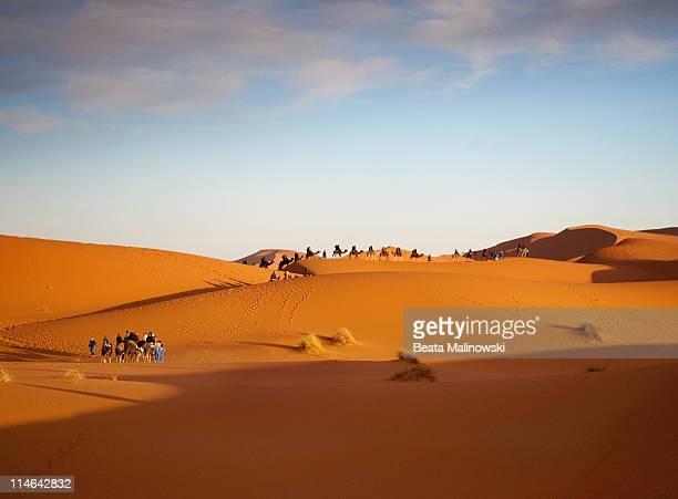 Camel Caravan Crossing Dunes