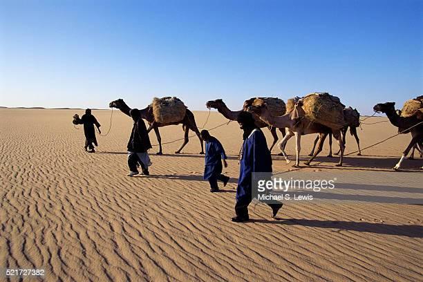 Camel Caravan Crossing the Sahara Desert