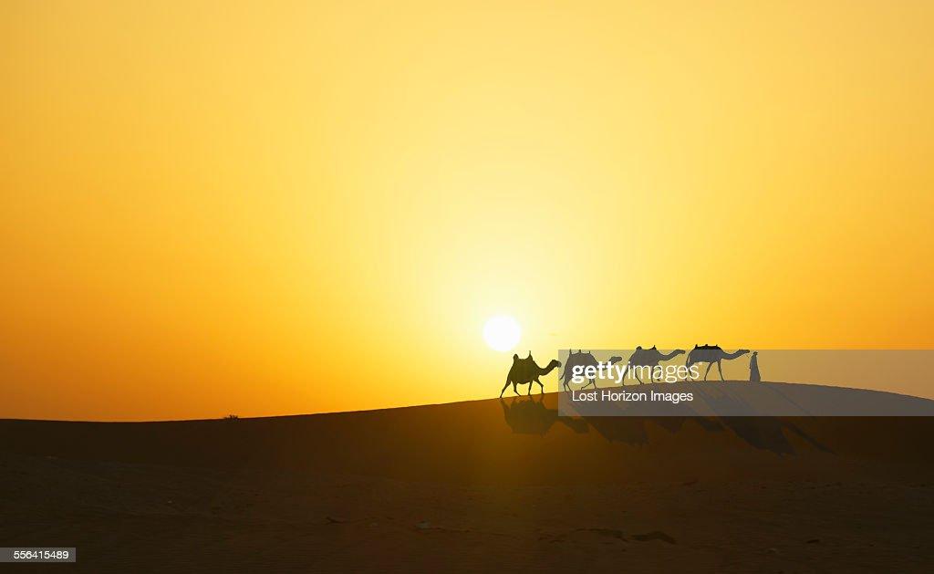 Camel Caravan In Desert At Sunset Dubai United Arab Emirates Foto de ...