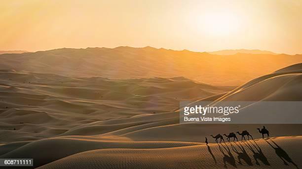 Camel caravan in desert at sunset