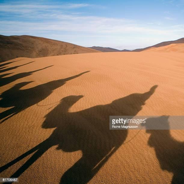 Camel caravan in desert, shadows on sand