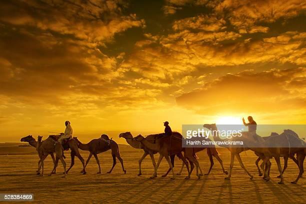 Camel Caravan in Dubai