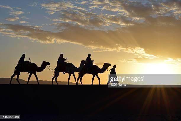 キャメルの caravan モロッコ