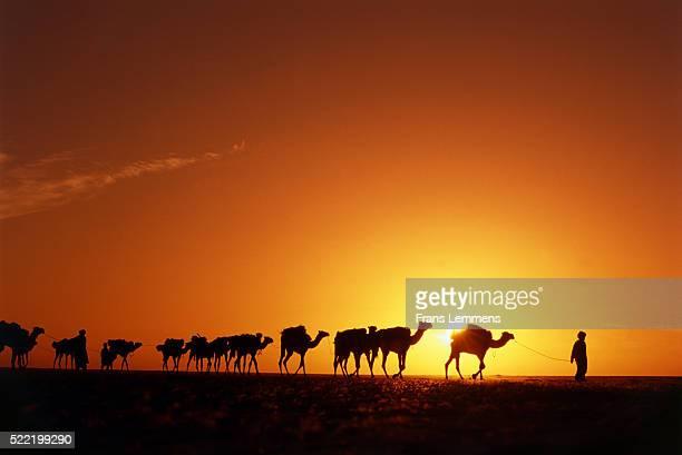 camel caravan in sahara desert, niger, africa - tuareg tribe stock pictures, royalty-free photos & images