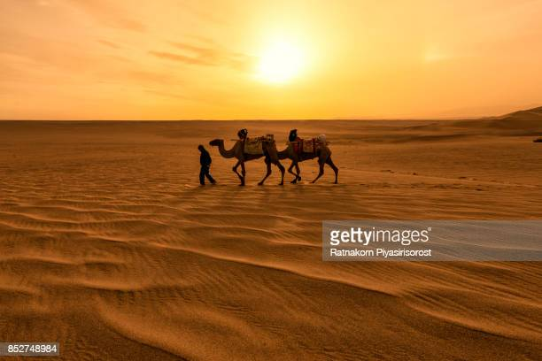 camel caravan in sand dune - saudi stock pictures, royalty-free photos & images