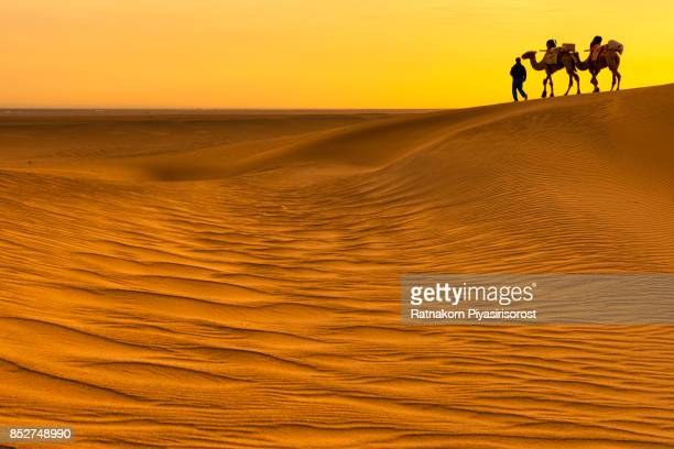 Camel Caravan in Sand Dune