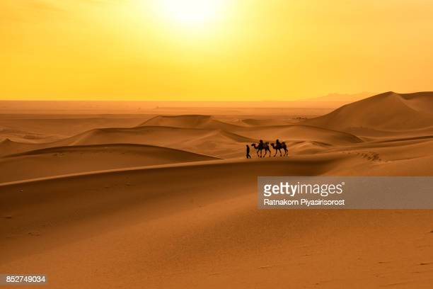 camel caravan in sand dune - gansu province stock pictures, royalty-free photos & images