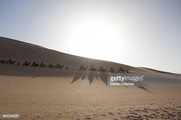 Camel caravan in the desert on the silk road