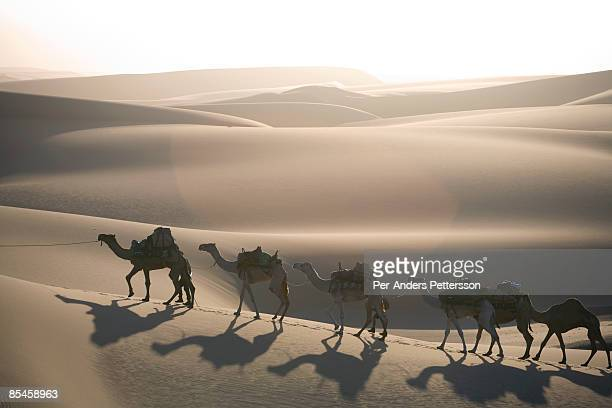 Camel caravan in the Namib Desert