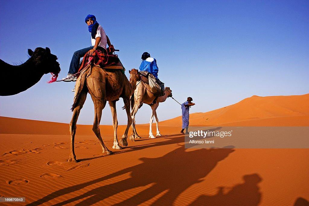 Camel caravan in the Sahara Desert (Erg Chebbi). With Berber Man riding the camels.