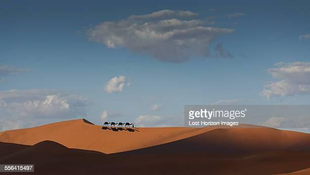camel caravan on desert horizon, dubai, united arab emirates - ラクダ ストックフォトと画像